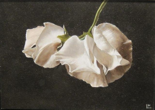 Jan Nederlof - Witte Lathyrus