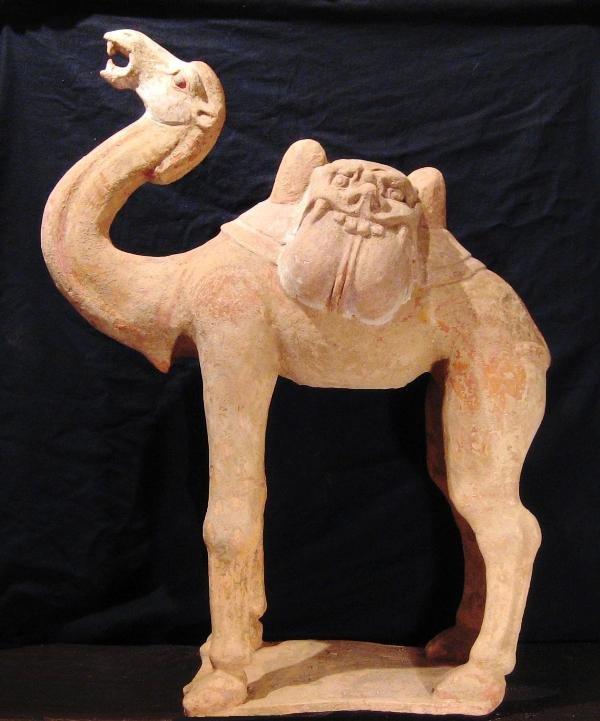 Chinese Archeologie - Grote Tang dynastie kameel (hoogte 67 cm.
